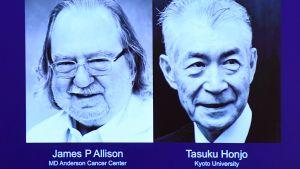 Lääketieteen Nobel-palkinto julkistetaan