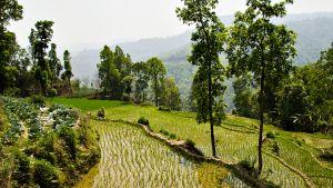 Sääpalvelusta apua Nepalin luonnonkatastrofeihin