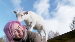 Eläinavusteinen valmennus vastaa työelämän paineisiin -Kili hoitaa uupunutta läsnäolollaan