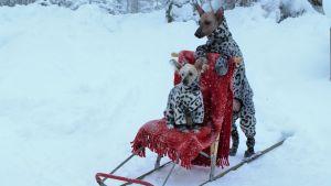 Lemmikkien parhaat talvityylit