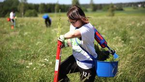 Nuoret istuttavat puita ilmastonmuutoksen hillitsemiseksi – samalla yritykset voivat kompensoida hiilijalanjälkijään