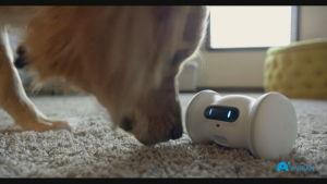 Varramin mainosvideo esittelee yksinäisen lemmikin seuraksi suunniteltua robottia