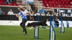 Elina Jänesniemi ja Etna aloittivat agilityn MM-kisat lupaavasti Turussa