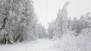 Luminen metsä ja sähkölinja.