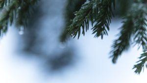 Luonto, metsä, Seitseminen, metsä, ilmastonmuutos.
