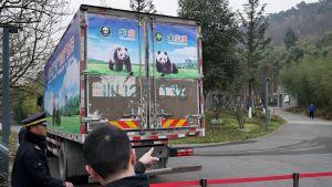 Pandakuorma-auto lähdössä kohti lentokenttää.