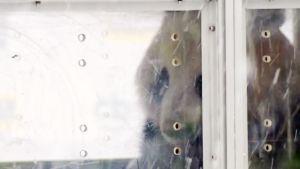 Pandat saapuivat Helsinki-Vantaan lentokentälle.