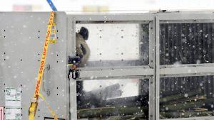 Panda kurkistaa kuljetuslaatikosta.