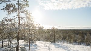 Talvinen maisema Kajaanin Akkovaaralta.