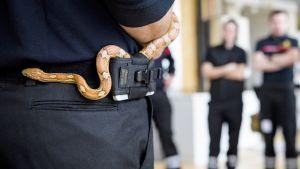 palomiehen vyössä on käärme