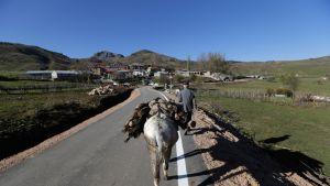Mies kuljetti polttopuuta aasilla Korcen kaupungin lälhellä Albaniassa joulukuussa 2016. EU valmistautuu aloittamaan jäsenyysneuvottelut Albanian kanssa.