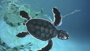 pieni kilpikonna takertunut verkkoon