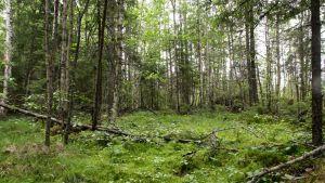 suolampare metsässä