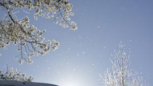 Lunta sataa ja  aurinko paistaa