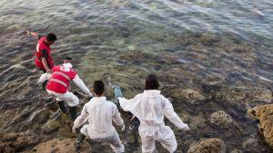 Libyan Punaisen Ristin edustajat poistavat vedestä Välimereen hukkuneen siirtolaisen ruumiin Libyan rannikolla.