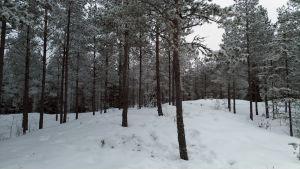 Kallioinen metsäaukeama talviasussaan.
