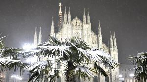 Palmut ovat peittyneet lumeen, taustalla Milanon katedraali.