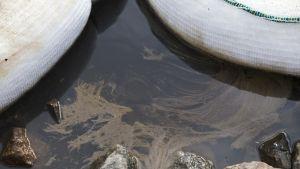 Öljyn imeytys liinoja sekä öljyä purossa