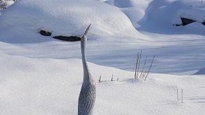Kurkipatsas lumen keskellä