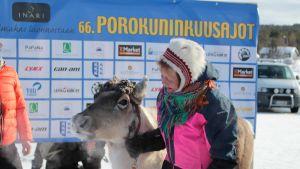 Vuoden 2018 porokuningas Tulimus ja Rauni Näkkäläjärvi.