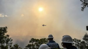 Palomiehet sammuttivat maastopaloa Sydneyssä.