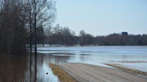 Kyrönjoki tulvii tielle Mustasaaressa 1904.2018