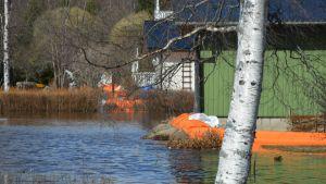 Kyrönjoen tulvaa Mustasaaressa 21.4.2018