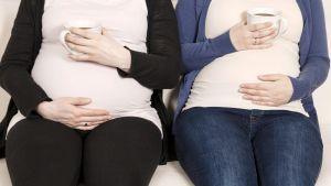 Raskaana olevat naiset pitävät kahvikuppeja vatsojensa päällä.