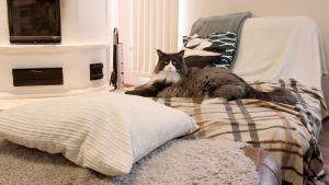 Kissa makoilee sohvalla.