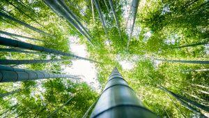 Bambumetsä