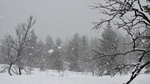 Lumisade Inarissa.