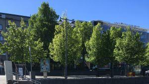 Saimaannorpan muotoiset ajoesteet saapuivat Savonlinnan kaduille.