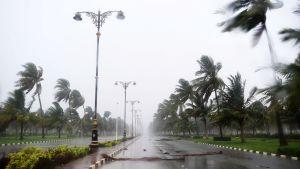 Myrskyn jälkiä kadulla.