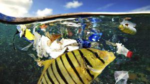 Kala syö meressä kelluvaa muoviroskaa.