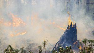 maastopalo ja savua