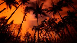 Kilauea-tulivuoren punainen hehku tummin palmupuiden taustalla.