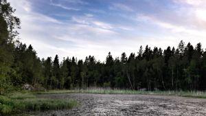 Lammassaaren metsäistä rantaa Vaasan saaristosta