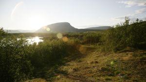 Kilpisjärven Saana-tunturi kylpee keskiyön auringossa.