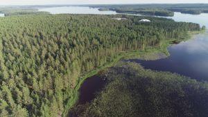 Kivijärven umpeenkasvanutta rantaa.