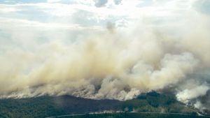 Metsäpaloja Ljusdalissa