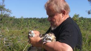 Juhani Karhumäki rengastaa kalasääsken poikasta.