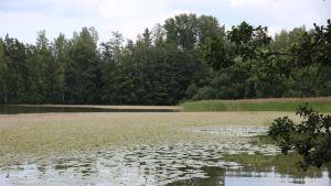 Tuusulanjärvi.