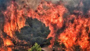 Palomiehet sammuttavat maastopaloa Kinetan kylässä lähellä Ateenaa