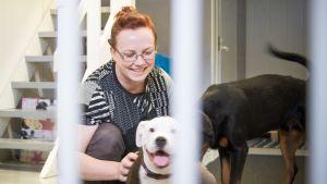 Suvi Pulkkinen hoitaa koiria