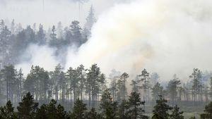 Ruotsin metsäpaloa