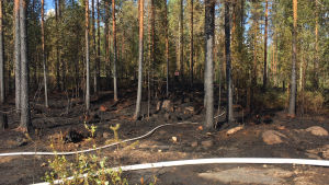Maastopalo ja metsäpaloja on sammuteltu eri puolilla Suomea.