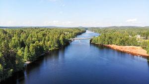 metsää ja järveä