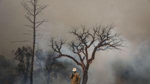 Metsäpalo raivoaa Monchiquessa, Portugalissa.