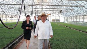 Heinäkuussa 2018 julkaistussa kuvassa Pohjois-Korean johtaja Kim Jong-un vierailemassa kasvihuoneella.