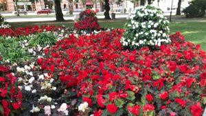 Kukkakeidas Vaasan keskustassa
